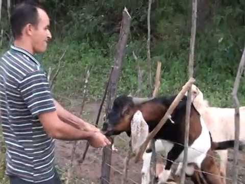 AGRICULTOR DESENVOLVE BOMBA D'ÁGUA QUE É SUCESSO NA REGIÃO