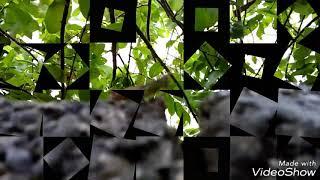 Câu chuyện ngày mưa gió...  :))) Make by: Camera Oppo A37fw