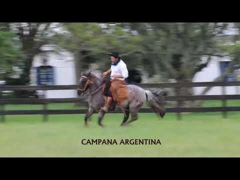 CAMPANA ARGENTINA