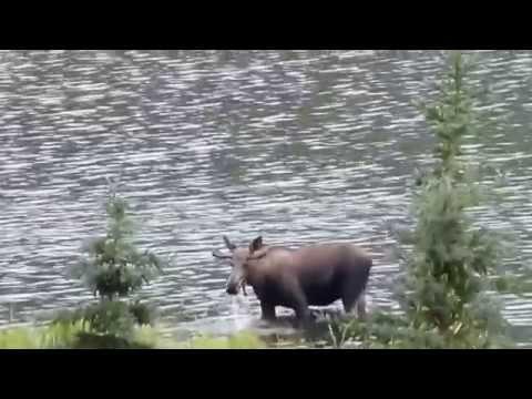 Overlanding Alaska with Infinite Adventures