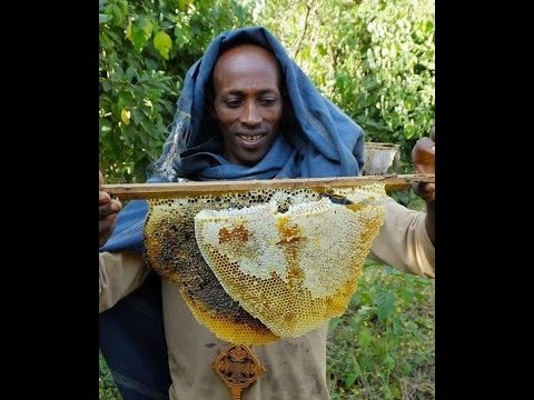 People and Bees in Ethiopia