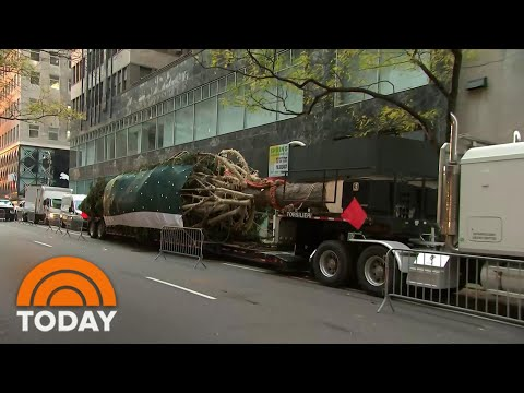 75-foot Christmas Tree Arrives In Rockefeller Center For Holiday Season | TODAY