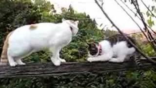 かご猫11