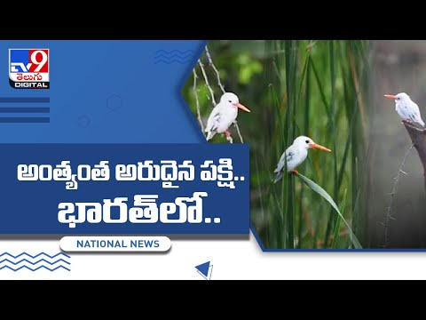 White coloured rare Kingfisher bird appeared first time in India, viral pics