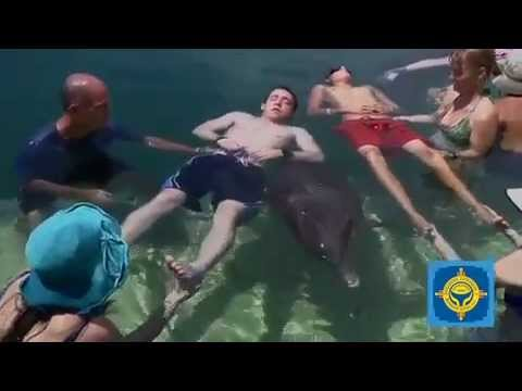 Dolphin Assisted CrainoSacral Therapy