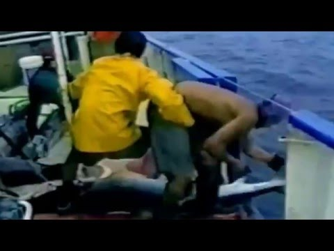 Shark Finning, An Abomination