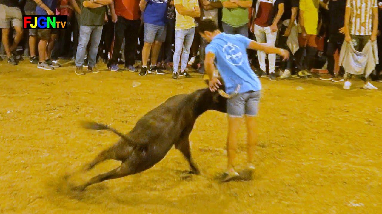Vacas Enfundadas Alberto Garrido 12-10-2019 Almassora (Castellon) Bous Al Carrer