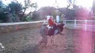 Michaela Riding An Ostrich
