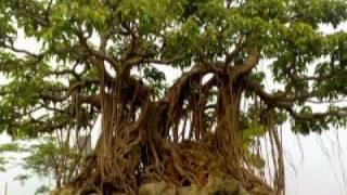 Cây cảnh triển lãm Hải Dương Video clip-bởi thanhvan62(1)