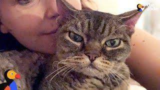 Aggressive Cat Shocks Mom By Becoming A Snugglebug - BARBARA | The Dodo