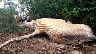 Weirdest Discoveries Made in the Jungle