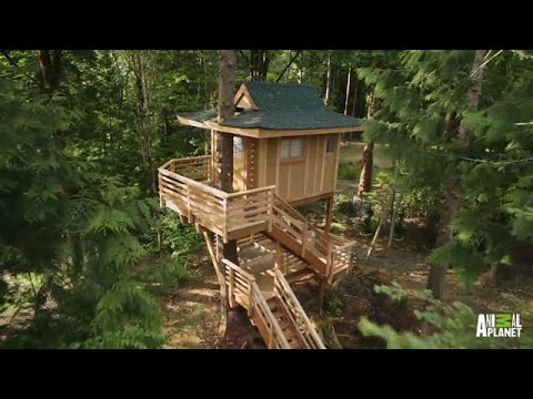 Behind the Build: Towering Treetop Teahouse | Treehouse Masters - Animal Planet  - iJInI6VJmks -