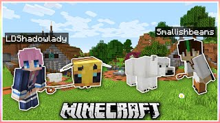 Minecraft But Whoever Collects the Most Mobs Wins...