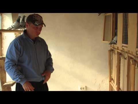 Георгій Раца з Чагра розводить спортивних голубів