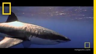 サメ保護3