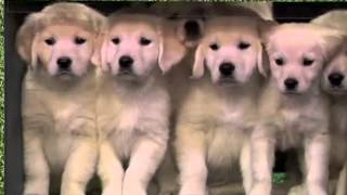 Puppy Stage Fright (Puppy Predictors Rehearsal) (Late Night with Jimmy Fallon)