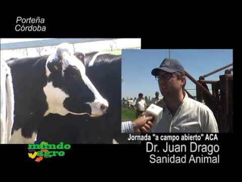 MUNDO AGRO 03JUE07JUN2013 PORTEÑA JORNADA A CAMPO ACA DR JUAN DRAGO SANIDAD ANIMAL