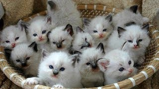 Funny Cats and Cute Kittens Video ❤ Funny Animals TV ❤ Funny Baby & Cat Vines compilation 202!