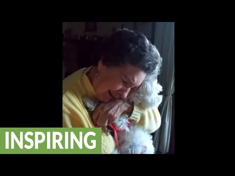 90-year-old grandma emotional after new puppy surprise