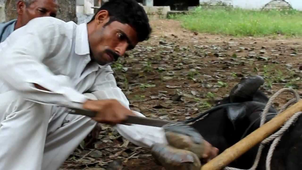 Cruelty against stray animals on the rise in India amid lack of effective laws