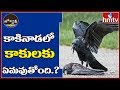 Amidst Corona scare, Crows found dead in Andhra Pradesh, create ripples