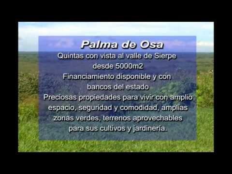 La Palma 2233 7778
