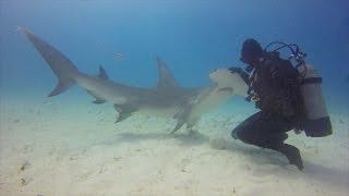 様々なサメと戯れる男