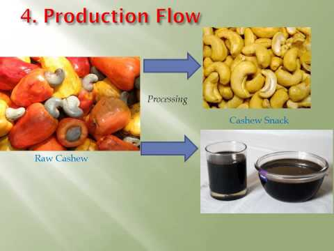 Cashew processing plant project in Cambodia looking for equity investors