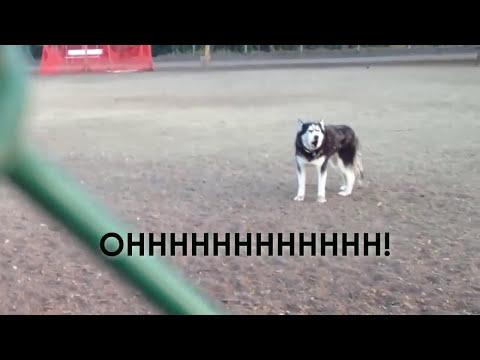 Реакцијата на кучето кога сопственичката му рече дека мора да ги напушти пријателите и да си оди дома