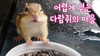 [ENG] 어렵게 얻은 다람쥐 밤이의 마음 :I had a hard time earning the chipmunk Bami's heart and trust.