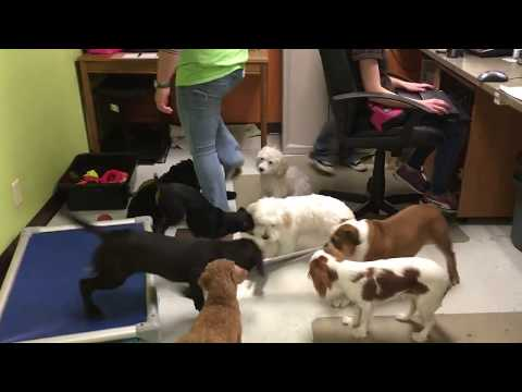 Puppy Daycare Fun at Metro Dogs Daycare in Minneapolis (612) 333-3612
