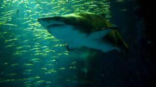 水族館12