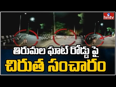 Leopard spotted in Tirumala ghat road, visuals