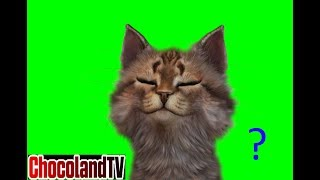 Cat Reaction : Funny Cats