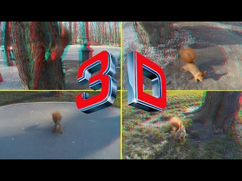 3D VIDEO . Crazy Squirrel in 3D