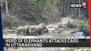 Herd of Elephants attack cars in Uttarakhand- Viral Video..