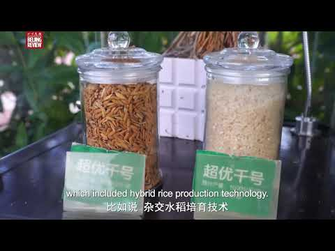 Beijing Review documents China's Hybrid Rice Production...