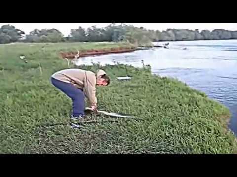 Нарубали сомов на рыбалке