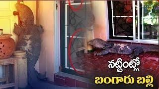Monitor Lizard enters house in Bangkok..
