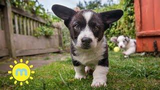 Episode 5 Secret Life of Puppies