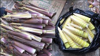 |Tập 142| Hai cha con lên núi hái măng có chút xíu được một bao luôn.Digging up bamboo shoot.죽순을 뽑기.