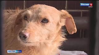 Муниципальному приюту для животных передадут партию благотворительной помощи