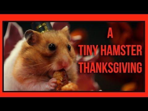 Baixar A Tiny Hamster Thanksgiving (Ep. 4)