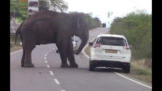 Injured huge elephant !