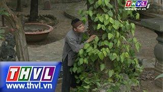 THVL | Thế giới cổ tích – Tập 84: Tục ăn trầu ngắt đuôi