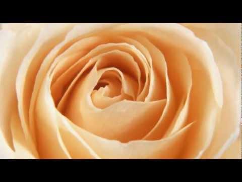 Li Guyi 李谷一 - 送我一支玫瑰花 Send me a Rose