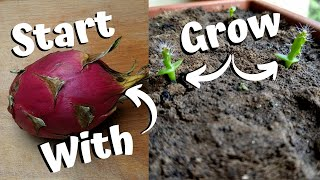Growing Dragon Fruit From Seed