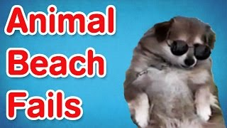 Animal Beach Fails | Fail Compilation