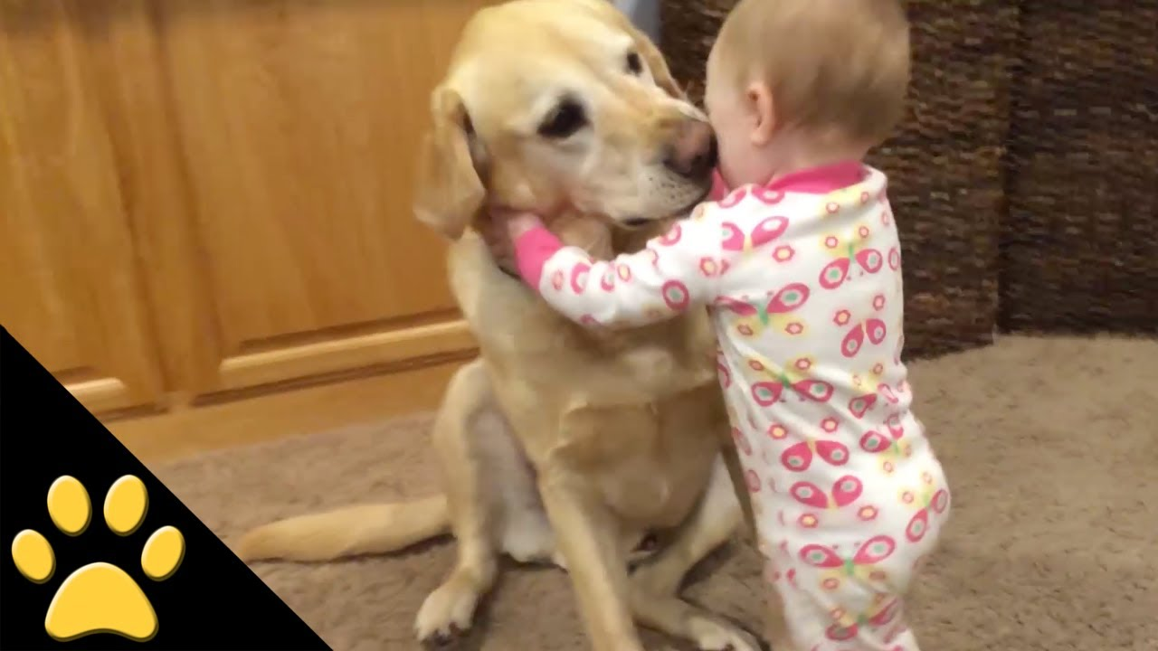 Funny Baby Puppies - Cute Dog Videos - Funny Puppy Dogs ...  |Cute Baby Dog Pictures