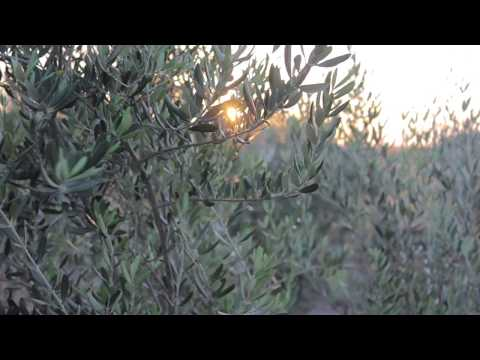 Texas Hill Country Olive Oil Company Indiegogo Video